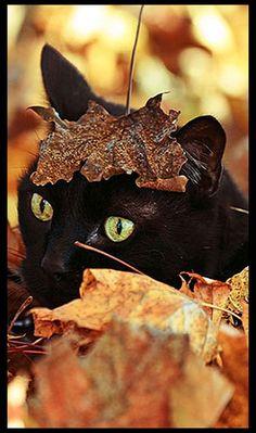 AUTUMN - funny - BLACK KITTY CAT  Photo von Matt White - www.boredpanda.com