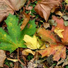 green-and-brown-leaves