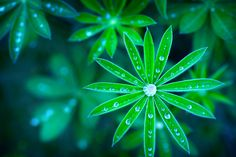 Beauty of morning dew