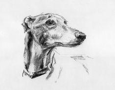 Dogs in Art at the StockBridge Gallery -  Greyhound Study A Charcoal Drawing by Justine Osborne, SOLD (http://www.dogsinart.com/grehound-study-a-charcoal-drawing-by-justine-osborne/)