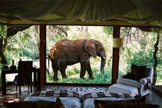 An elephant outside a suite window at Makanyane Safari Lodge