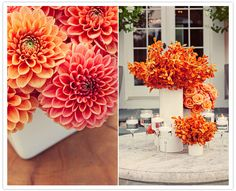 orange and pink dahlias