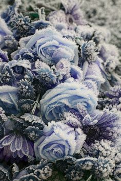 Icey purple and blue and gray | Frozen Blooms