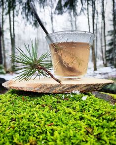 💚PINE NEEDLE TEA💚 After all the holiday feasting my body craves for something green! Pine needles are one of those wild foods you can forage during the winter months. The taste of pine needle tea is actually pleasent tasting and not bitter at all. Pine needles are considered 💚Anti-inflammatory 💚Anti-microbial 💚As a pain reliever They contain polyphenols, antioxidants and vitamin C. Workshop Organization, Pine Needles, Winter Months, Bitter, Food Hacks, Finland, Alcoholic Drinks, Berries, Herbs