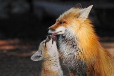 Feed Me Photo by Sandy Sisti — National Geographic Your Shot