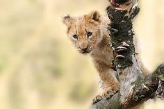 León, Animales, La Naturaleza
