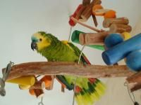 Discount Bird Toys : 10 best pet parrot supplies images on pinterest parrot toys