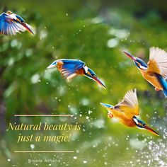 The Felician Sisters were founded in Poland in 1855 by Blessed Mary Angela Truszkowska, who was beatified in 1993 by Pope John Paul II. Good Morning Nature Images, Shaman Woman, Public Profile, Tell The World, What Inspires You, Nature Pictures, Natural Beauty, Blessed, Bird
