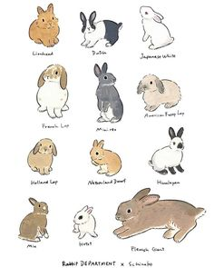 Acrylic Paint by Schinako Moriyama | ARTWOONZ Rabbit Drawing, Rabbit Art, Pet Rabbit, Dwarf Rabbit, Cute Animal Drawings, Animal Sketches, Cute Drawings, Cute Baby Bunnies, Cute Baby Animals