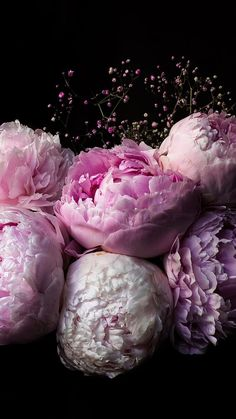 Peonies iPhone Wallpaper - iDrop News - Growing Peonies - How to Plant & Care for Peony Flowers Peonies Wedding Centerpieces, Peonies Centerpiece, Peony Bouquet Wedding, Peonies Bouquet, Tall Centerpiece, Centerpiece Wedding, Ranunculus, Wedding Flowers, Peonies Wallpaper