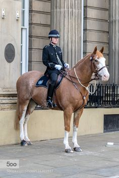 Sheffield Police Horse