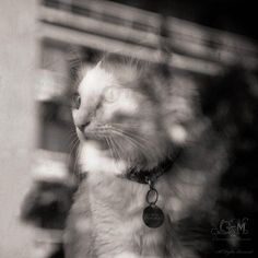 #The cat in the window  Like,Repin,Share, Thanks!