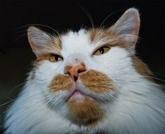 Orange mustache - Went through a rough patch last night!!