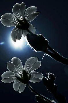 In The Moonlight Midnight Garden Photos Paysage Staroon Night Skies