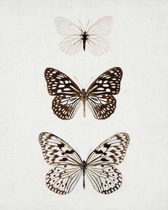 ''O que a lagarta chama de fim do mundo, o homem chama de borboleta.'' Richard Bach: