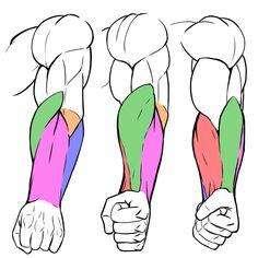 Arm Drawing, Human Anatomy Drawing, Hand Drawing Reference, Human Figure Drawing, How To Make Drawing, Anatomy Reference, Art Reference Poses, Arm Anatomy, Body Anatomy