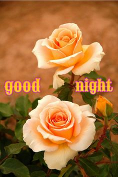 Good night - Kishor Ekatpure - Google+