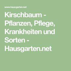 Kirschbaum - Pflanzen, Pflege, Krankheiten und Sorten - Hausgarten.net