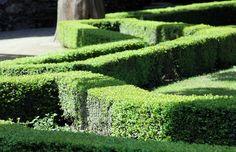 © Valentina Pasolini #CastellodiMasino #labirinto #siepi Il secondo labirinto più grande d'Italia