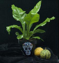 Asplenium nidus. Mexican Halloween, Skull, Plants, Plant, Skulls, Sugar Skull, Planets
