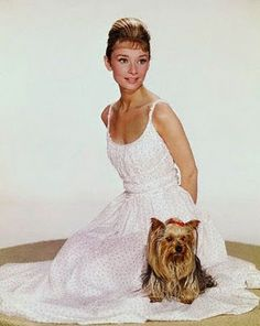 Audrey and her Yorkie, Mr. Famous, he went everywhere with her.  Sound like anyone you know?