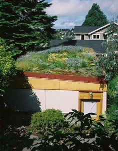 A Green Roof in Seattle