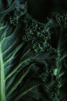 Kale chips — Call me cupcake