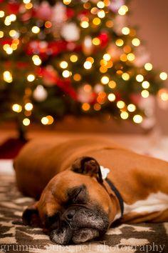 Sleepy Boxer!