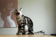 Photo prise par Chloe Badaya-Delaroche La France compte 11 millions de chats domestiques contre 7,6 millions de chiens.Trouvez la meilleure assurance pour votre animal de compagnie grâce à ce comparateur en ligne Découvrez d'autres images de Chloé Badaya Delaroche