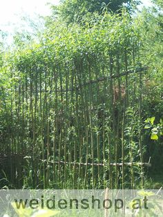 weidenzaun living willow fence after planting salix. Black Bedroom Furniture Sets. Home Design Ideas