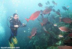 Diving in Honduras, Roatan Honduras Roatan, Scuba Diving, Underwater, Places To Go, The Incredibles, Spaces, Amazing, Summer, Animals