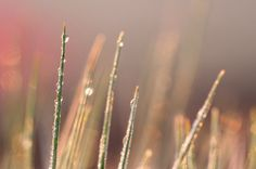 I really like the detail of the water droplets on the grass stem. I also like the strong light which seems to be coming from the morning sun. Although the background is a bit distracting it sort of adds a sense of the surrounding area to the picture. I also like the slight bokeh affect created.