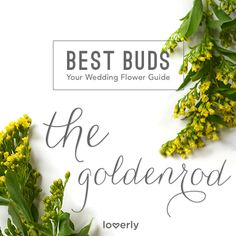 Bouquet Inspiration: Everything you need to know about goldenrods for your wedding
