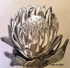 Title: After the Fire 2 Medium: Mixed media on paper: Pen and ink/graphite Size: x Protea Art, Protea Flower, Bloom Blossom, Natural History, Graphite, Flower Art, Wild Flowers, Flower Arrangements, Art Projects