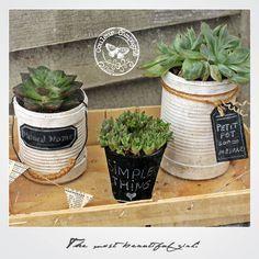 Les petits pots de fleurs recyclés de Martine…