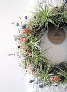 The Montecito wreath is created upon order using an assortment of gorgeous live air plants, live spanish moss, hand-dried summer flowers, and other subtle sparkling foliage details. Deco Floral, Arte Floral, Air Plants, Indoor Plants, Indoor Herbs, Cactus Plants, Air Plant Display, Cactus Y Suculentas, Summer Flowers