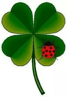 Sometimes we just need a bit of luck. Coeur Gif, Borboleta Tattoo, Lucky Plant, Clover Tattoos, Irish Tattoos, 4 Tattoo, Irish Blessing, Luck Of The Irish, Four Leaf Clover