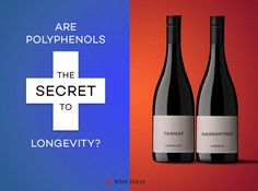 Some red wines have significantly higher levels of what science has determined to be the beneficial ingredients found in wine. Find out which red wines are the best for you (and surprise: it& not Cabernet or Pinot Noir! Types Of Red Wine, Wine Folly, Best Red Wine, Pinot Noir Wine, Wine Searcher, Wine Education, Wine Sale, Wine Guide, Expensive Wine