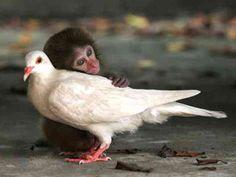 Odd Animal Couples | SMOSH