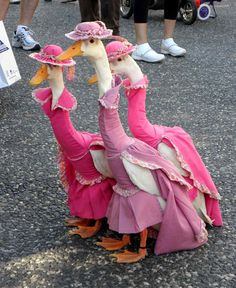I need to dress all those geese in my backyard like this.
