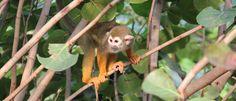 Gondwanaland - Leipzig Zoo. Squirrel monkeys