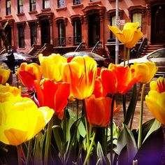 tulips...remind me of one very special person...my grandma! LOVE