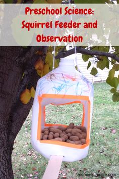 Preschool Science: Nuts to You! Squirrel Feeder and Observation activity. Science Activities For Kids, Preschool Science, Preschool Lessons, Autumn Activities, Book Activities, Toddler Activities, Preschool Activities, Preschool Education, Science Experiments