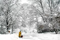 作品名稱:冬天奇境  又濕又厚的雪蓋在無葉的樹枝上。又白又柔,毛似的雪幾乎把整條路都蓋滿了。雪還在下時,有人已經出來清理他的汽車道了。此相片在2010年2月28日攝于紐約思卡思達的彭妮巷。   Work Tile: Winter Wonderland                    Thick layer of wet snow were deposited on the leafless tree branches. White and fluffy snow covered almost entirely the road. A man was out to clean up his drive way even it was still snowing. The picture was taken at Penny Lane, Scarsdale, New York on February 28th, 2010.