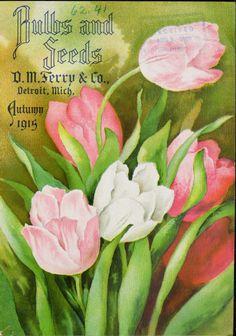D.M.Ferry, 1915
