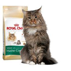 Alimento específico para #gato #MaineCoon  #Maskokotas #RoyalCanin #gato #cat Maine Coon 31 Royal Canin Maskokotas