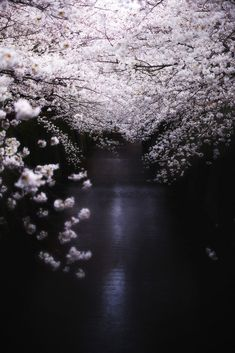 Night in cherry blossoms river,Tokyo, Japan