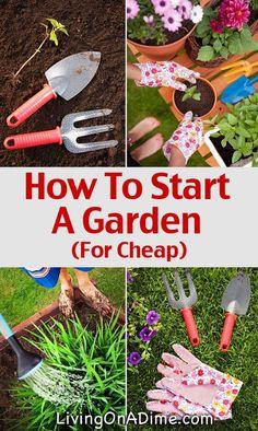 How To Start A Garden For Cheap