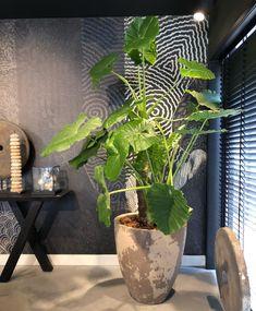 Potted Plants Patio, Indoor Plant Pots, House Plants, Interior Plants, Interior And Exterior, Foliage Plants, Terrace Garden, Plant Decor, Modern Luxury