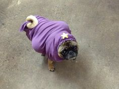 A pug dressed as Lumpy Space Princess from Adventure Time! Pugs In Costume, Dog Halloween Costumes, Dog Costumes, Princess Dog Costume, Adventure Time Cosplay, Lumpy Space Princess, Pug Love, Amazing Adventures, Cute Pictures